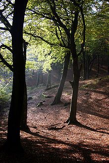 Tandle Hill - Wikipedia, the free encyclopedia