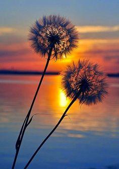 Sunset, make a wish..