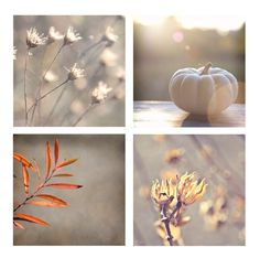 Autumn and Fall Home Decor photography print pack by ara133photography