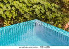 Swimming pool corner with garden background