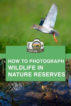 Want to Photograph Wildlife in Nature Reserves? These tips and tricks will help you make the most of a day out with your camera. Wildlife Photography Tips, Best Landscape Photography, Dslr Photography Tips, Photography Tips For Beginners, Photography Lessons, Underwater Photography, Outdoor Photography, Photography Tutorials, Digital Photography