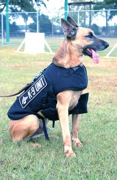 Too many police dogs are injured on the job due to insufficient gear. Vested Interest in K9s has recently raised money to purchase several protective vests for police dogs all across the country. Thank them for these tremendous efforts.