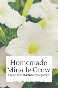 Make this Homemade Miracle Grow for Your Garden and double your blooms, now!