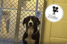.Herzerweichend: Hier realisiert ein Hund, dass er aus dem Tierheim geholt wird