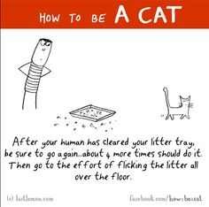 After your human has cleared your litter tray, be sure to go again...about 4 more times should do it. Then go to the effort of flicking the litter all over the floor.