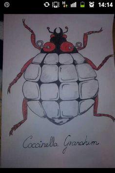 Coccinela granatum