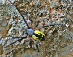 Awesome Spider in Va Bugs And Insects, Spiders, Awesome, Spider