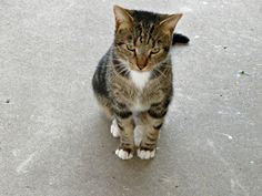 "A Cat Named Rudi by Michaline ""Adela"" Bak on 500px"