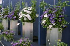 Výsledek obrázku pro chelsea flower show 2015