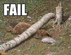 beaver shot - Google Search