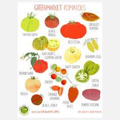 Greenmarket Tomato print by Claudia Pearson.