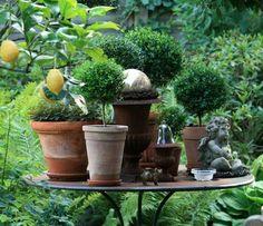 ...k?nnen wir wieder auf unseren Platz in den Garten .Anfang M?rz r?ume ich meine Myrten aus dem Wintergarten aus .