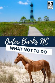 Find out what NOT to do when you visit the Outer Banks, North Carolina Outer Banks Rentals, Outer Banks Nc, Travel Usa, Travel Tips, Canada Travel, Travel Guides, Travel Destinations, National Park Passport, National Parks