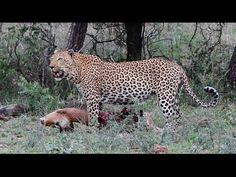 Overnight Safari In Kruger National Park - Higlights