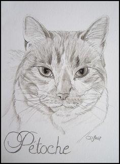 Cat portrait by Cindy Barillet