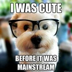 Cute hipster dog