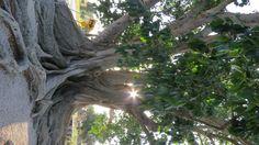 tree, florida Florida, Trees, Angel, Garden, Nature, Plants, Garten, Naturaleza, Tree Structure