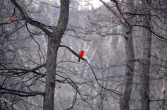 A red touch of color on a grey day~