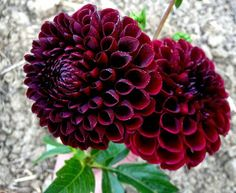 VOM HÜGEL Steiermark Succulents, Shabby, Creative, Nature, Flowers, People, Plants, Red, Dekoration