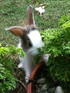 Bunny Munches