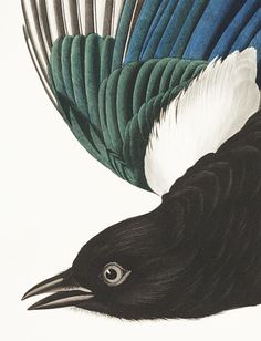 John James Audubon's Birds of America | Audubon