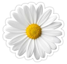 Meaning of the dream in which you see the Daisy. Detailed description about dream Daisy. Flores Vintage Png, Does He Love Me, Tumblr Png, Pure White Background, Tumblr Stickers, Sugar Flowers, Daisy Flowers, Aesthetic Stickers, Transparent Stickers