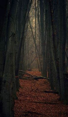 Den Didenko, Dark forest in Ukraine Looks enchanted! Beautiful World, Beautiful Places, Enchanted Wood, Dark Forest, Autumn Forest, Autumn Rain, Deep Autumn, Autumn Cozy, The Great Outdoors