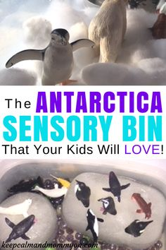 The Antarctica Sensory Bin That Your Kids Will Love! Sensory Bins, Sensory Bin Ideas, Sensory Fun, Making Learning Fun, Activities For Kids, Activities For Toddlers, Activities For Preschoolers