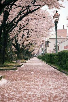 pink, flowers, and tree kép
