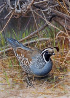 Sitting Tight - Valley Quail 7x5, painting by artist George Lockwood