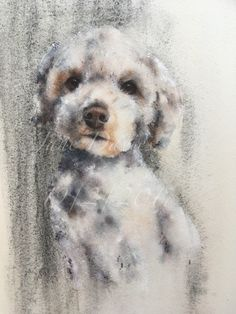 Poodle dog painted by watercolour artist Jane Davies