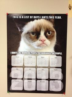 Grumpy Cat Calendar: I don't like morning people or mornings or people. That grumpy cat is such a grump! Every month of every day of the year she has a frown on Cute Cats, Funny Cats, Funny Animals, Cute Animals, Grumpy Cat Humor, Cat Memes, Funny Memes, Grumpy Kitty, Hilarious