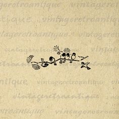 Printable Graphic Birds on Branch Antique Download Image Digital Vintage Clip Art. High quality digital image. This printable digital artwork works well for printing, fabric transfers, and more great uses. Real vintage art. This digital graphic is high quality and high resolution at size 8½ x 11 inches. Transparent background version included with every graphic.