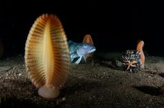 photograph, seas, national geographic, sea pen, brian skerri
