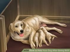 Image titled Help Your Dog After Giving Birth Step 22