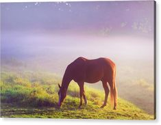 Jenny Rainbow Fine Art Photography Acrylic Print featuring the photograph Grazing Horse. Rural Holland by Jenny Rainbow Art Prints For Home, Fine Art Prints, Thing 1, Foggy Morning, Iconic Movies, Any Images, Art Techniques, Fine Art Photography, Landscape Paintings