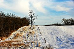 Sprucewoods by Across & Down, via Flickr. Farm and forest area near Brandon, Manitoba, Canada.