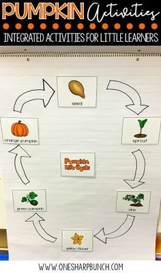 FREE life cycle of a pumpkin activities, including pocket chart sentences and sequencing printable. Perfect for your pumpkin investigations! Plus, we love the adorable pumpkin crafts! Kindergarten Lesson Plans, Kindergarten Activities, Science Halloween, Preschool Halloween, Fall Preschool, Preschool Ideas, Preschool Crafts, Halloween Crafts, Parts Of A Pumpkin