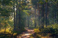 Landscape Art, Landscape Paintings, Landscape Photography, Nature Photography, Nature Artwork, Nature Photos, Beautiful Places, Beautiful Pictures, Summer Trees