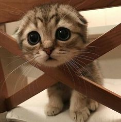 Love Cute Animals shares pics of playful animals, cute baby animals, dogs that stay cute, cute cats and kittens and funny animal images. Baby Animals Pictures, Cute Animal Pictures, Animal Pics, Animals Images, Adorable Pictures, Hilarious Pictures, Baby Pictures, Cute Little Animals, Cute Funny Animals