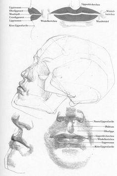 A wonderful book: Die Gestalt des Menschen by Gottfried Bammes