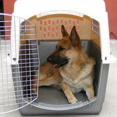 Cómo elegir un transportín para mi perro - 7 pasos