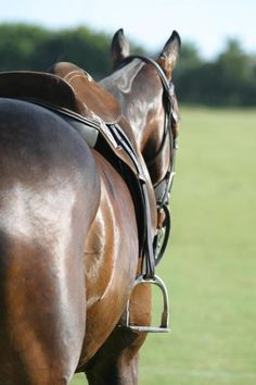 There is something about the outside of a horse that is good for the inside of a man. ~Winston Churchill