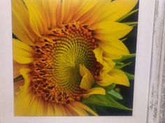 Sunflower photography, Kitchen decor, Shabby Chic, Cottage decor, Wall art…