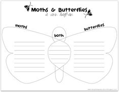 Relentlessly Fun, Deceptively Educational: Moths and Butterflies - Another Lesson in Differences Moth Vs Butterfly, Butterfly Life Cycle, Reading Tips, School Closures, Science Lessons, Science Fair, Kindergarten Science, Teacher Blogs, School Lessons