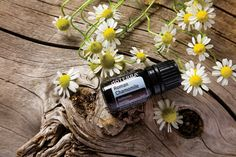 Roman Chamomile essential oil has a calming effect on the skin, mind, and body*, soothes the systems of the body*, and may help support healthy immune system function.* Click to learn more! #essentialoilspotlight