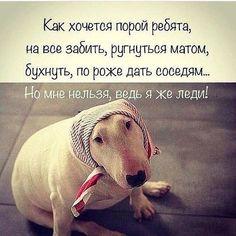 Russian Jokes, Letter Art, Have Some Fun, Joker, Funny Memes, Lol, Lettering, Album, Motivation