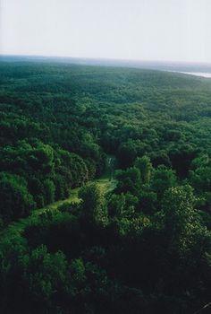 A Floresta... muito verde!
