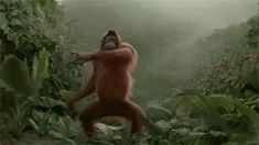 The perfect Orangutan HappyWeekend Woo Animated GIF for your conversation. Discover and Share the best GIFs on Tenor. Weekend Gif, Happy Weekend, Weekend Greetings, Orangutan, Cute Gif, Gifs, Animation, Instagram, Cargo