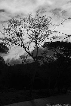 Black & White Tree Along the River Bank Black And White Tree, River Bank, Celestial, Sunset, Photos, Outdoor, Outdoors, Pictures, Sunsets